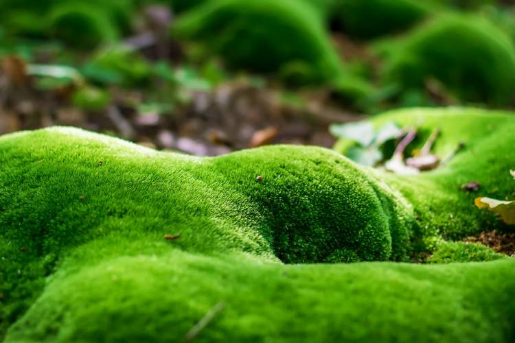 Can Land Moss Grow In Aquarium Kings Of The Aquarium