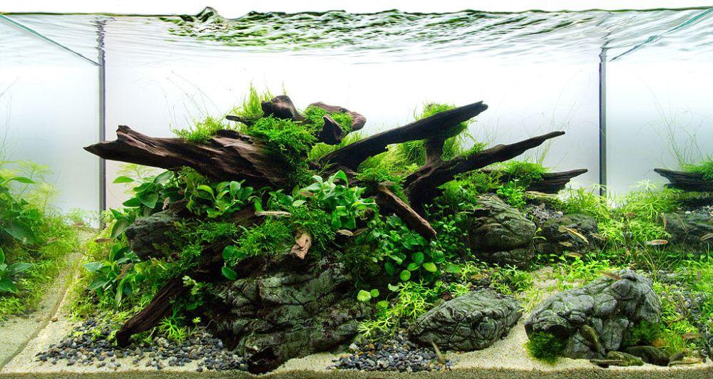 Buying Aquarium Wood