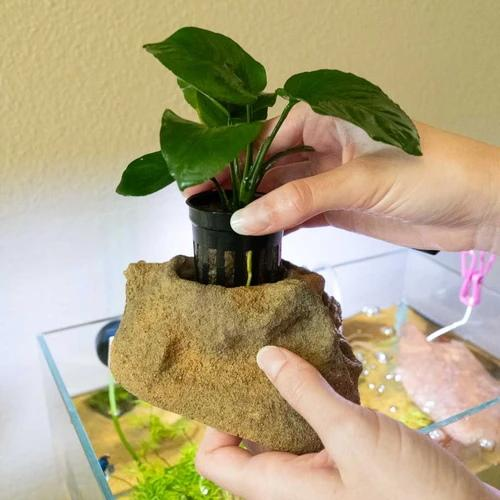 How to Plant Aquarium Plants