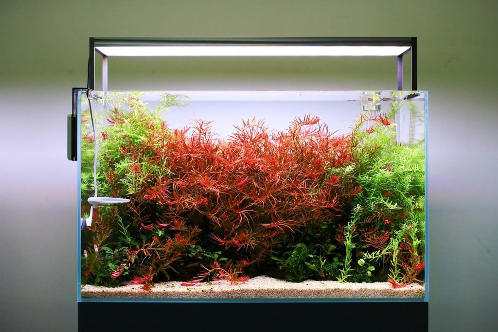 Give Your Plants Adequate Lighting