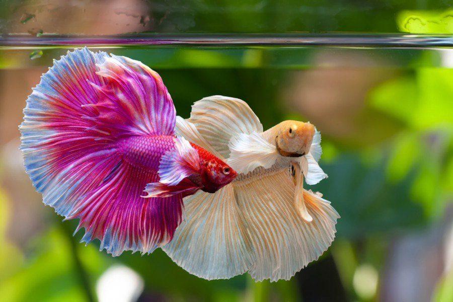 How Do Fish Listen