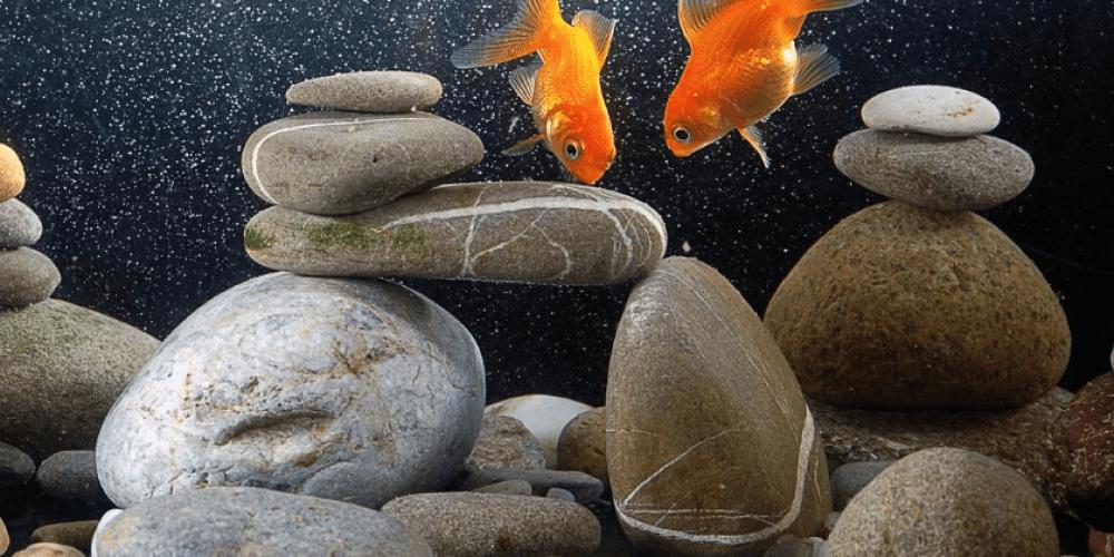How to Prepare Rocks for Aquarium Use