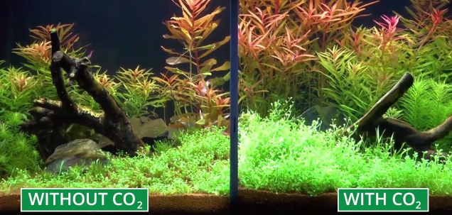 Aquariums with and without CO2