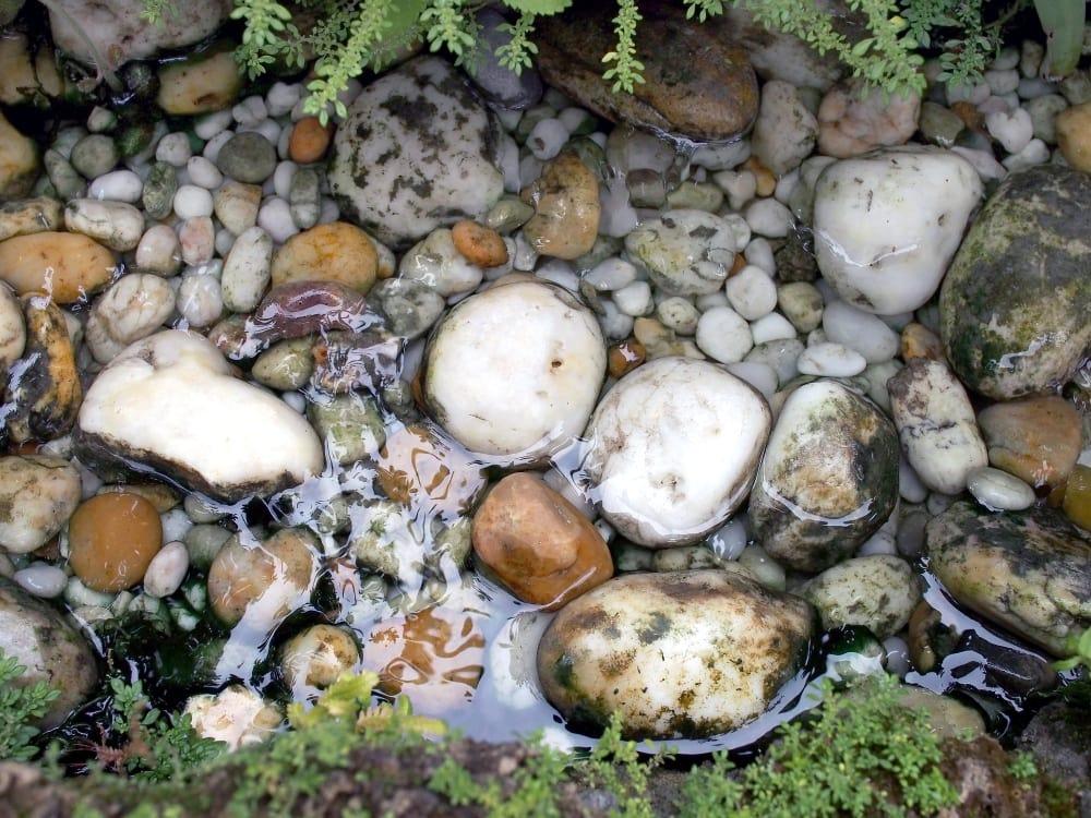 Soaking Rocks in Bleach for Tank Use