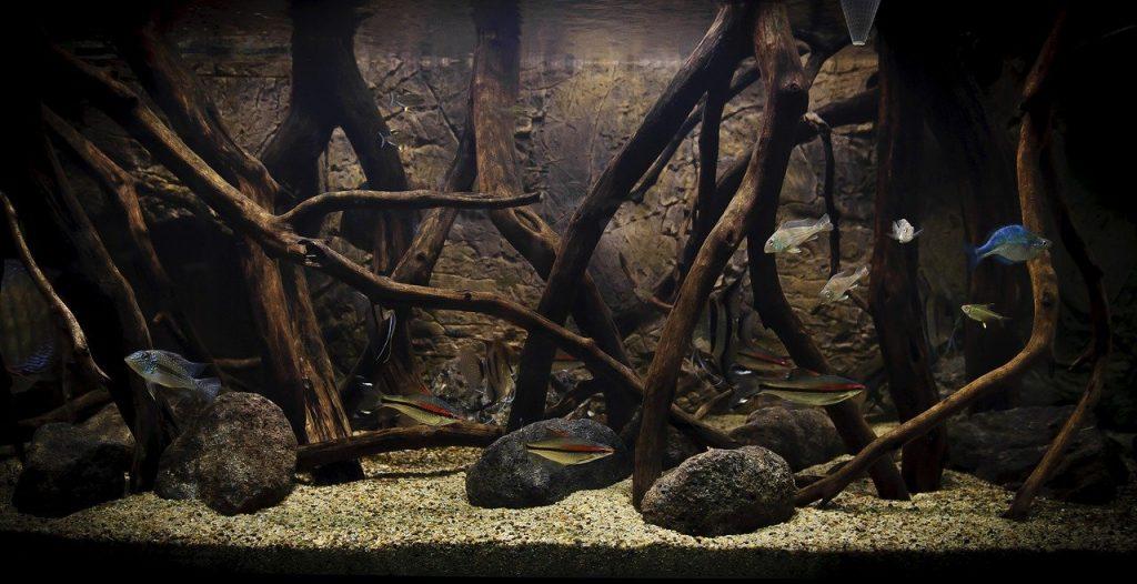 Suitable Woods for Aquariums