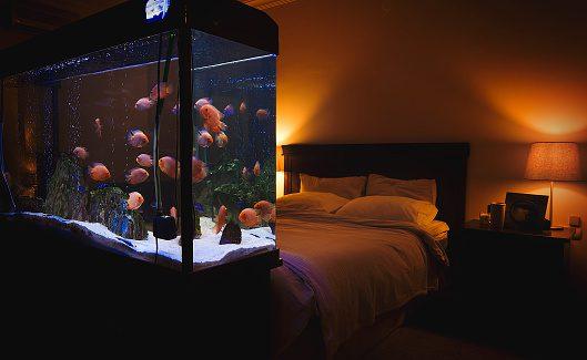 fish tank in Bedroom