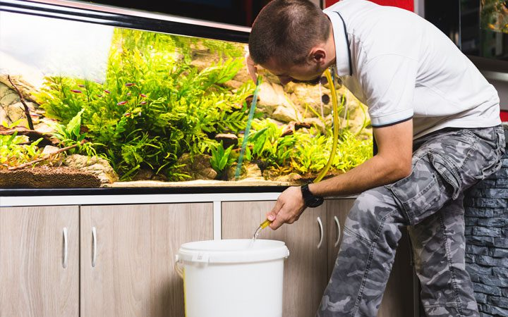 Water Changes to Cool Your Aquarium
