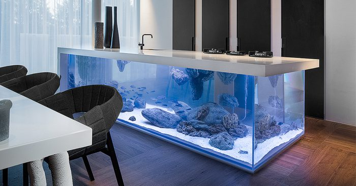 fish tank in the kitchen