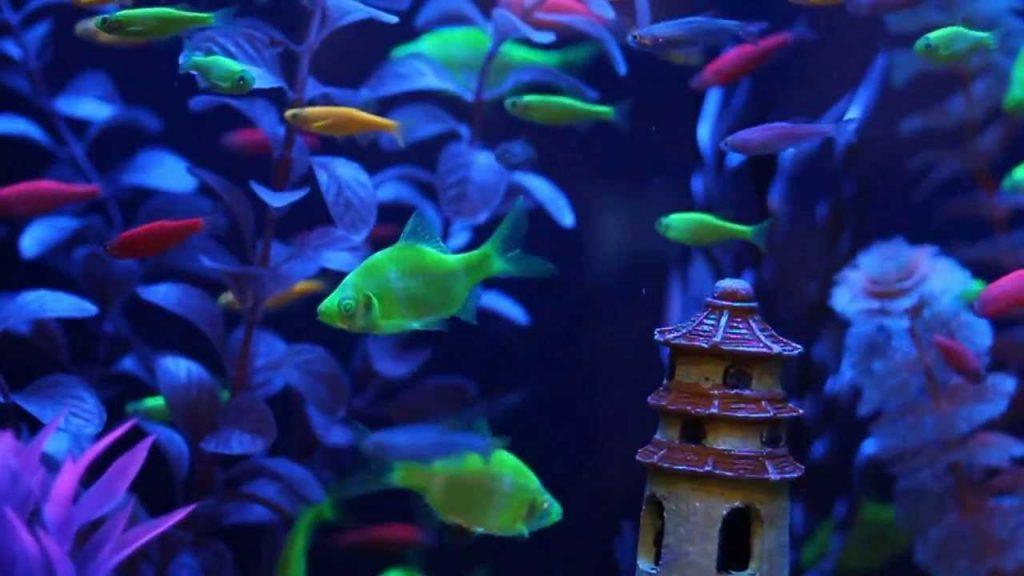 Fish Glow in Blacklight