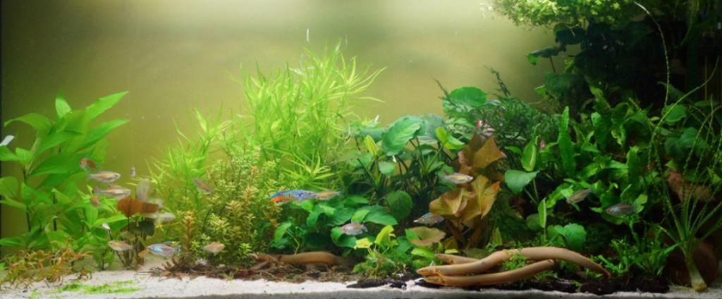 Ropefish Tank Requirements